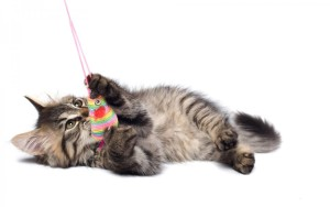 Как же можно поиграть с кошкой