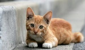 Кошачий насморк