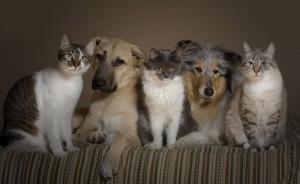 Кошка в доме с другими животными