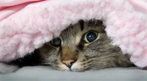 Кошки – синоптики