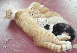 Кошки в книге рекордов Гиннеса