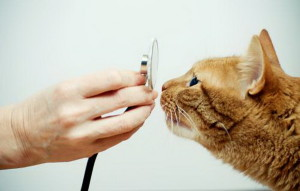 Лейкемия у кошек