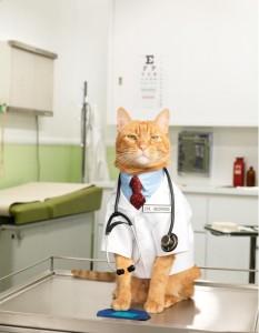 Могут ли лечить кошки