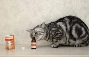 Почему кошки любят валерьянку