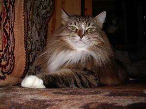 Понимают ли кошки человеческий язык