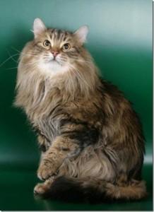 Породы кошек для одиноких людей