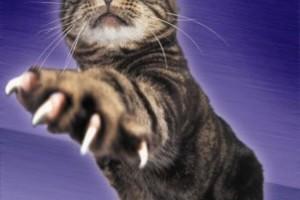 С помощью чего кошки чувствуют опасность