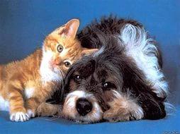 А правда ли, что кошка и собака – вечные враги