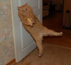 А правда ли, что кошки глупее собак