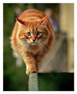 Формирование зубов у кошки заканчивается еще до достижении года.