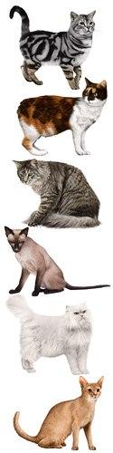 какие породы кошек на картинках
