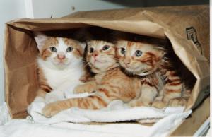 Интересные мифы о кошках