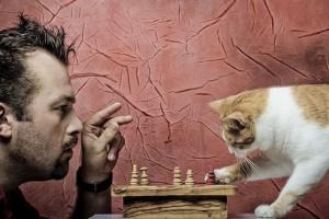 Как кошка выбирает себе хозяина