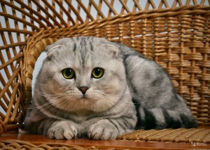 Как помочь кошке пережить переезд