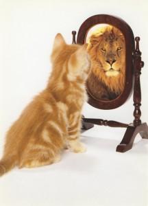 Каждый котенок обладает индивидуальными особенностями