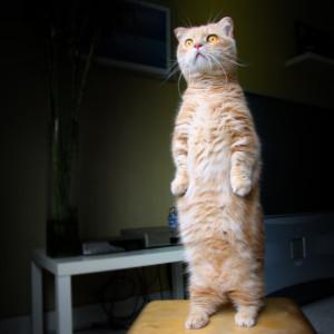 Котята любят обследовать различные темные укрытия и уголки