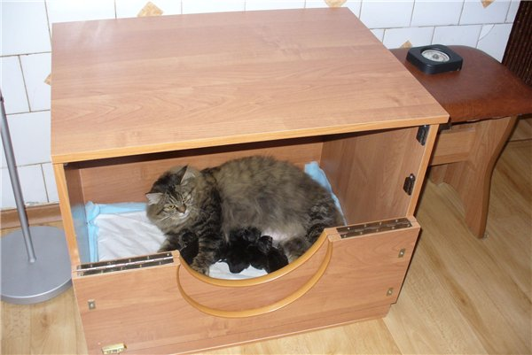 Домик для родов кошки