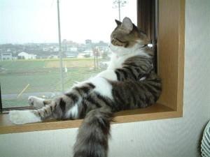 ?irin Kedi Resmi