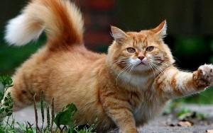 Многие кошки испытывают потребность в свежей зелени