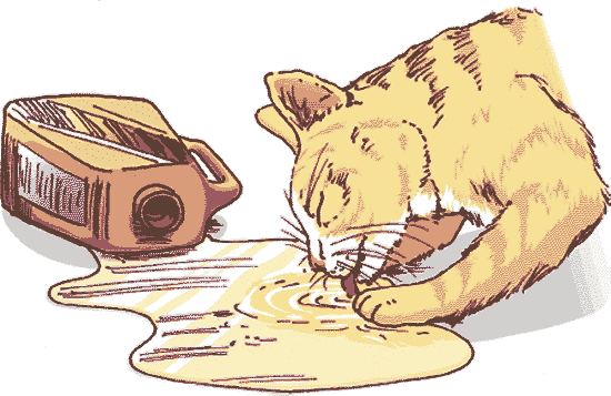 Как вылечить отравление кота в домашних условиях