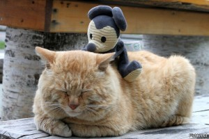 Почему кошки спят в ногах человека