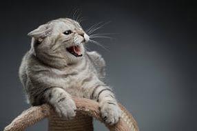 При появлении в доме нового питомца кошка может проявлять агрессию