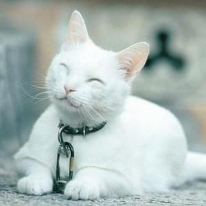 Прикольные клички кошек