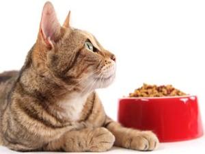 Стареющей кошке рекомендуется периодически давать сухой корм